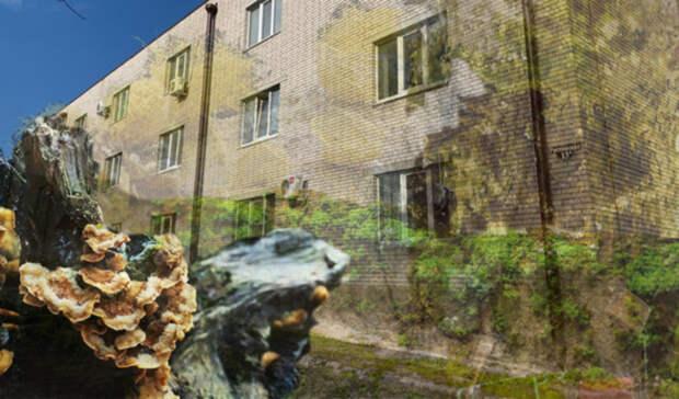 Дома сирот с трещинами и плесенью прокуратура Ростовской области признала пригодными