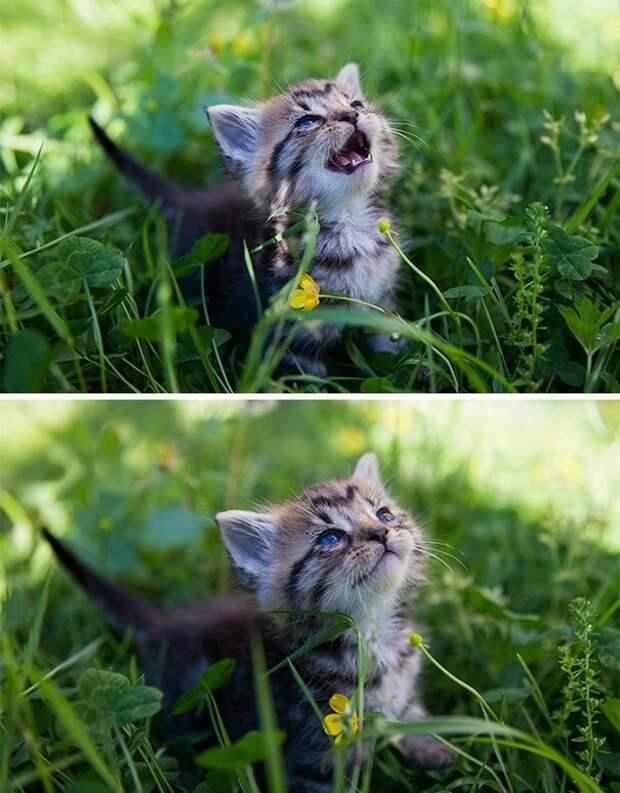 18. Первый раз увидел солнце домашние питомцы, забавные животные, кошки забавное, кошки и собаки, морды, реакция, смешные животные, собаки и кошки