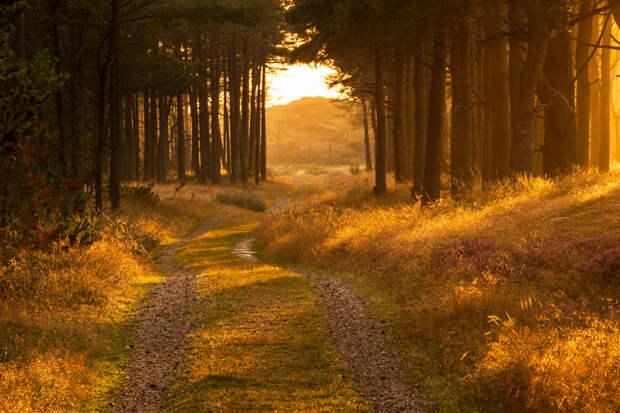 Goldenes Abendlicht by Kai Hiksch on 500px.com