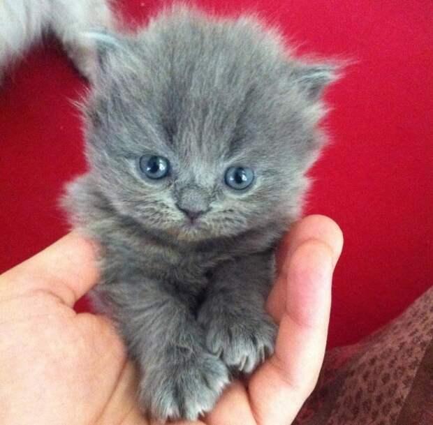 2. Если кошка голубоглаза... котики, мимими