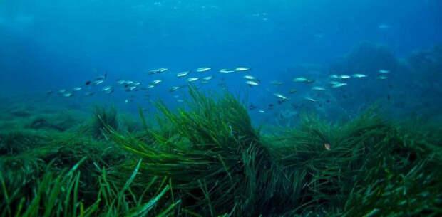 Морские водоросли.