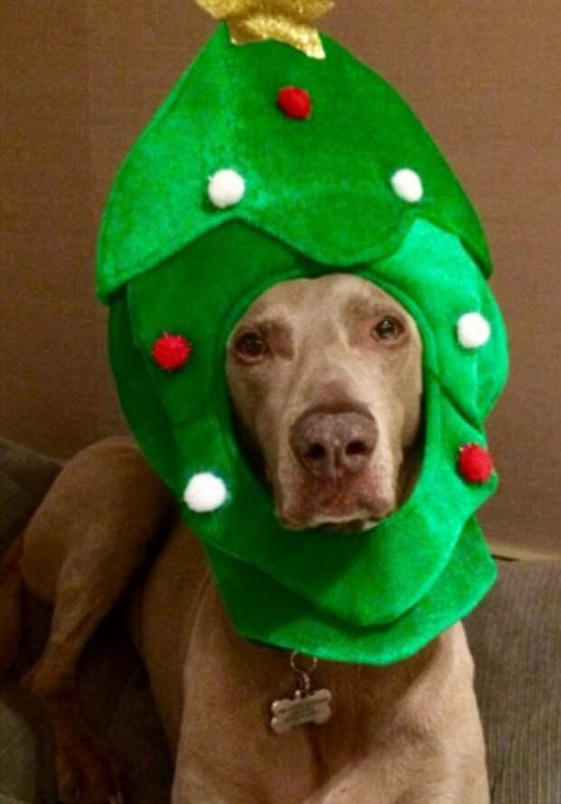 Животные в ожидании Рождества и Нового года (20 фото)