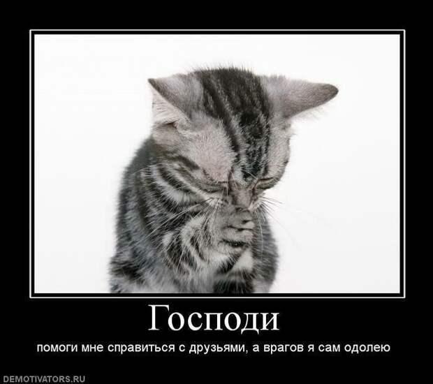 Образ кота в демотиваторах