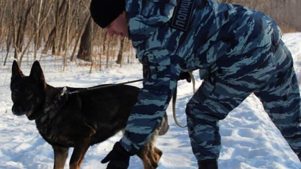 Лиса поймала вора в деревне в Приморье