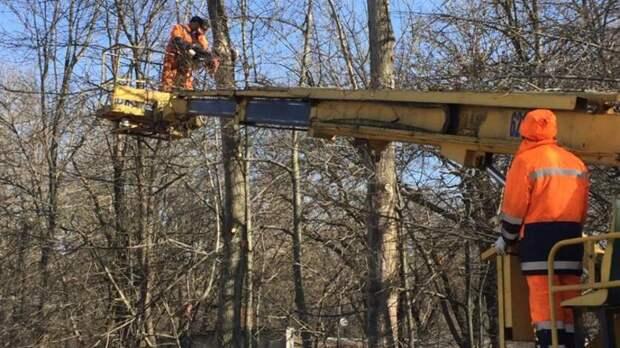 Кобрезке испилу деревьев приступили впарке Островского вРостове