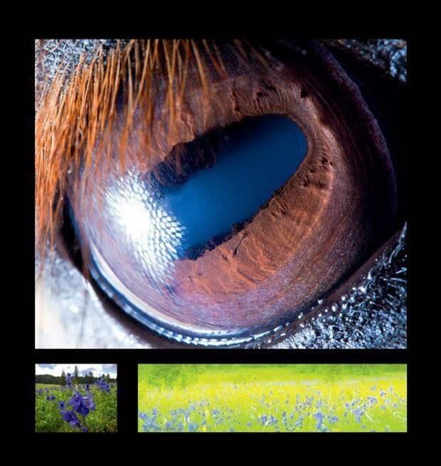 7 фотографий показывающих как видят собаки, кошки, киты, змеи и другие животные