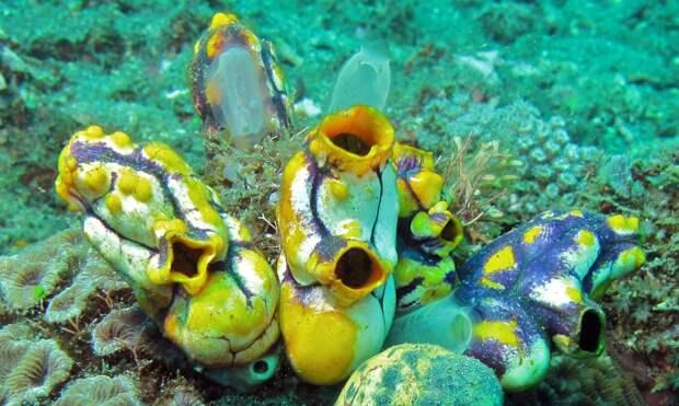Учёные обнаружили морское существо, способное полностью регенерировать тело