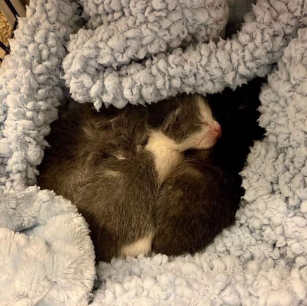 Приютская хаски стала нянечкой осиротевших котят история, история спасения, котята, мило, собаки, спасение животных, трогательно
