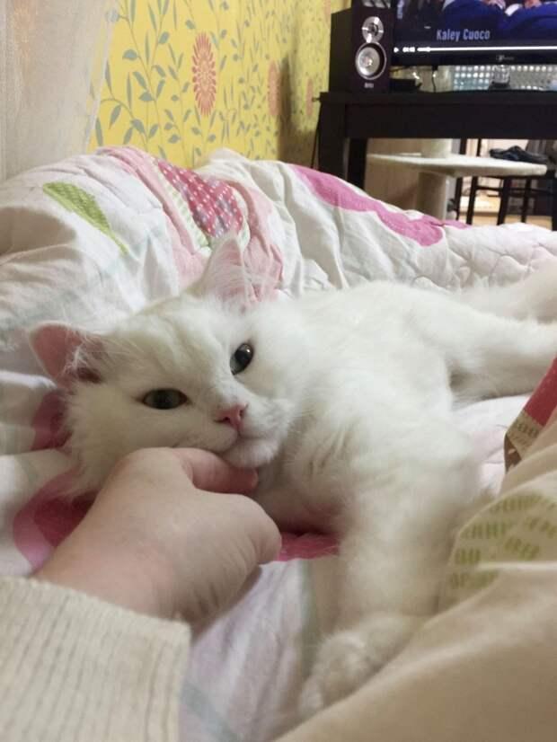 Работники приюта не верили, что этот кот поправится и отговаривали девушку забирать его!