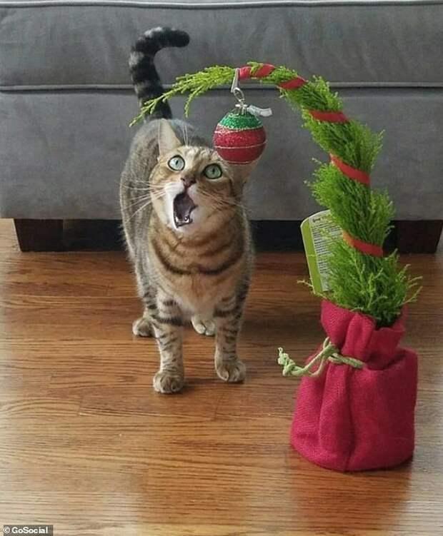 """2. Первое Рождество: """"Как это - не когтеточка?!"""" домашние питомцы, забавные животные, кошки забавное, кошки и собаки, морды, реакция, смешные животные, собаки и кошки"""
