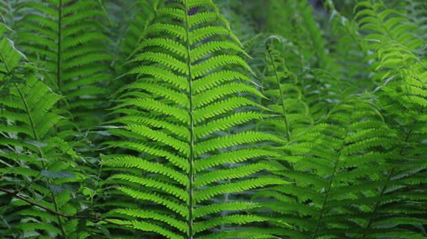 Зеленые и неприхотливые: какими растениями украсить темные участки сада