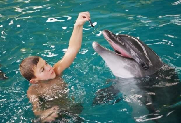 Существовали ли в Советском Союзе боевые дельфины