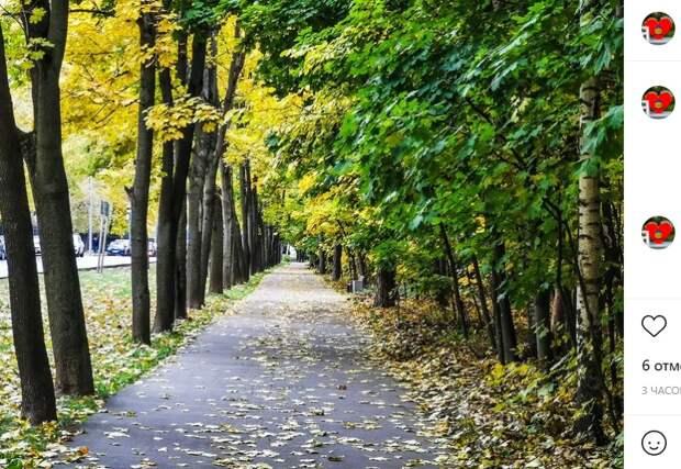 Фото дня: лето встретилось с осенью на Пехотной