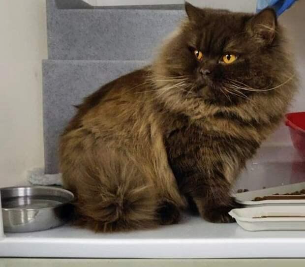 Российский кот из Мурманска преодолел 3 тысячи километров и оказался в Англии