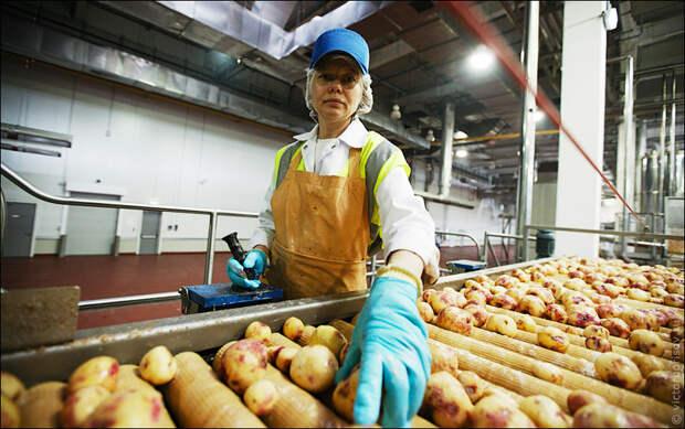 Как высокомерие миллионера Вандербильта помогло изобрести чипсы