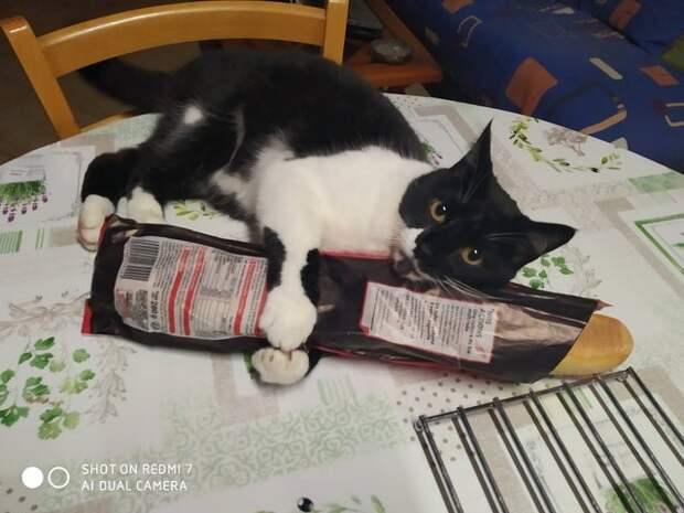 кот и багет