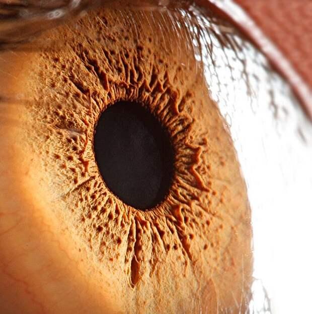 eye-macro-photo-9
