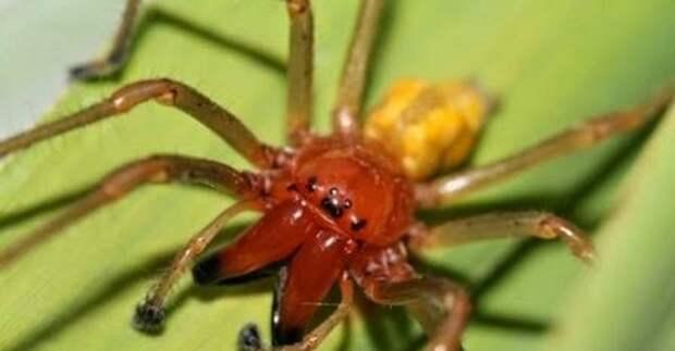 Под Ростовом двух женщин покусали ядовитые пауки