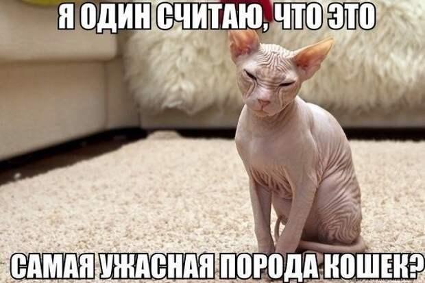 _DJJ5QzTQKc
