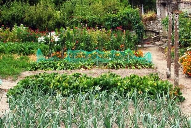 Вот что нужно посадить на огороде, чтобы отпугнуть вредителей