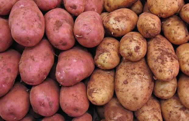 Чем отличаются розовый и белый картофель: что подойдет для жарки, а что - для пюре