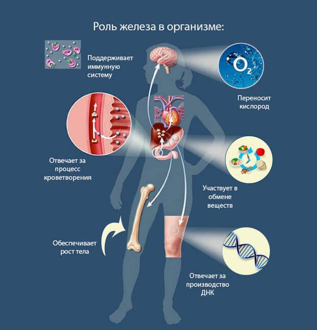 Дефицит микроэлементов, которыми страдают почти все
