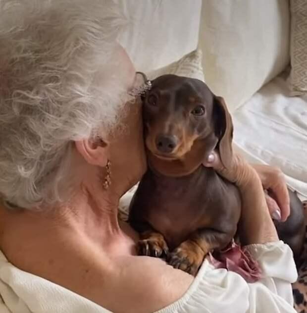 Собаку обнимают