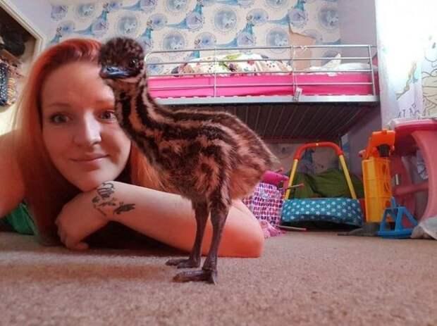 Шарлотта Харрисон и её новый питомец - страусёнок Кевин. ebay, страус