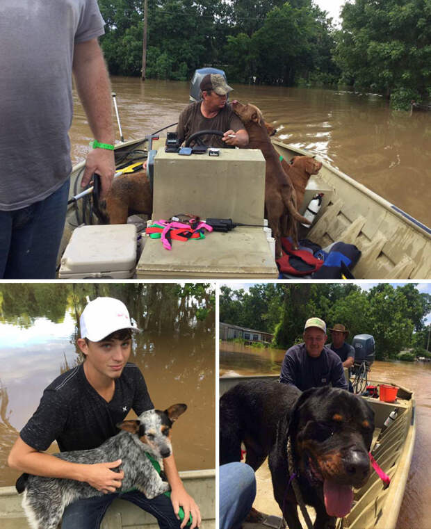 Отец и сын спасли 30 собак, брошенных хозяевами во время наводнения в округе Бразория, штат Техас Счастливый конец, животные, спасение