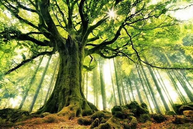 Деревья собираются подключить к сети 5G