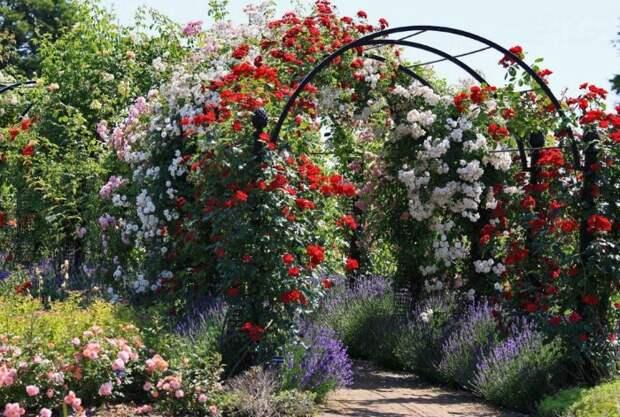 Вьющиеся растения украшают арку / Фото: landshaftm.ru