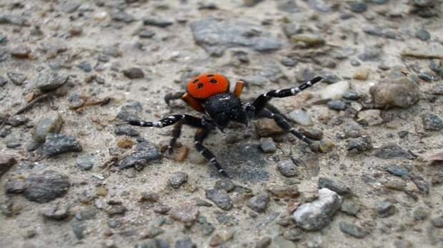 На Южном Урале обнаружили редкого паука