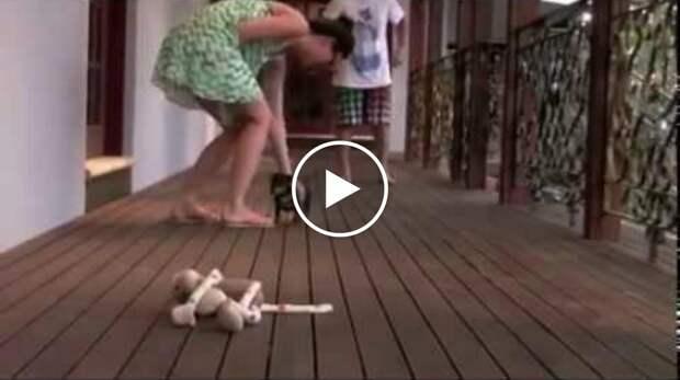 Малюсенький щенок защищает свою хозяйку