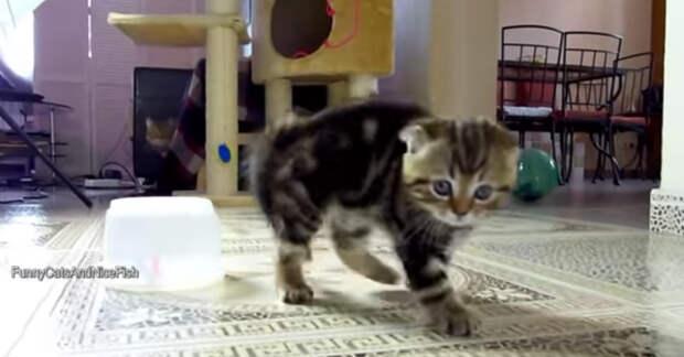 Забавный и веселый котенок Рокки и его семья