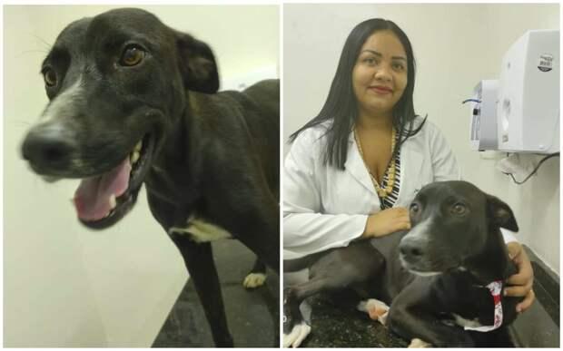Раненый пес сам пришел в клинику за помощью и удивил ветеринаров