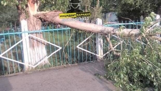 Дерево упало на тротуар возле детского сада в Барнауле