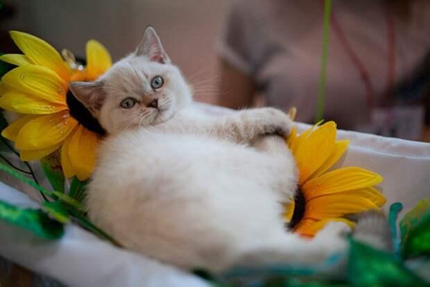 Самая распространенная поза для сна у кошек - клубочек Фото: Дмитрий АХМАДУЛЛИН