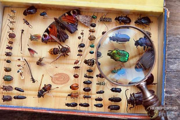 В плену у мёртвых жуков