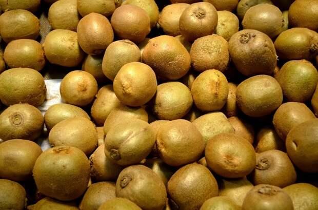 В Белоруссии собрали первый урожай озимого картофеля