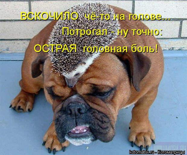 kotomatritsa_- (1) (700x580, 338Kb)