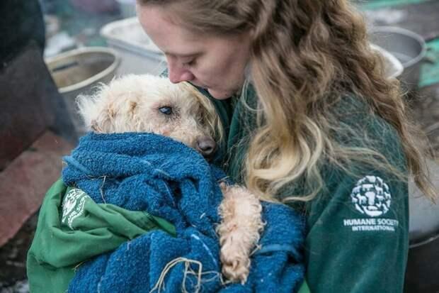 Зоозащитники освободили 200 собак, содержавшихся в ужасных условиях на ферме в Южной Корее добро, животные, зоозащитники, поступок, собака, спасение, южная корея