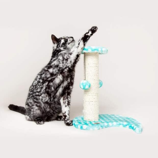 История котика Лоскутка с невероятным мраморным окрасом