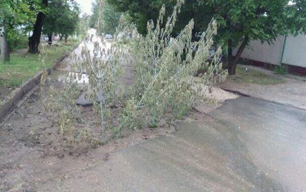 «Лайф-хак» от коммунальщиков Крыма: как быстро избавиться от ям на дороге (фото)