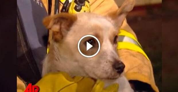 Пожарные были поражены, узнав почему эта собака не хотела покидать горящий дом