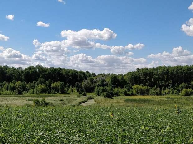 Типичный пример речушки, ставшей болотом