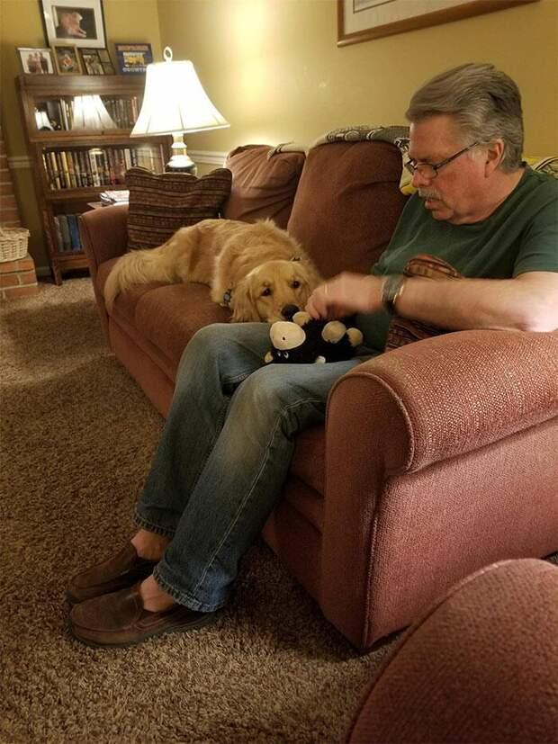 Животные, которые не в силах расстаться с любимыми игрушками