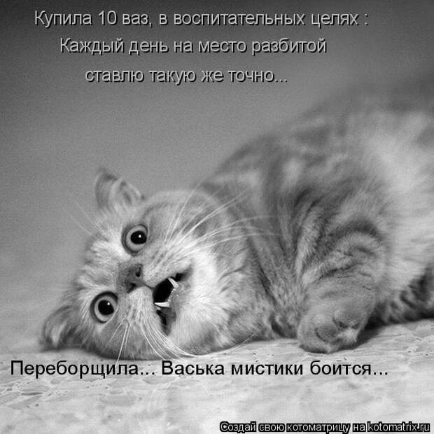 kotomatritsa_F (650x650, 159Kb)