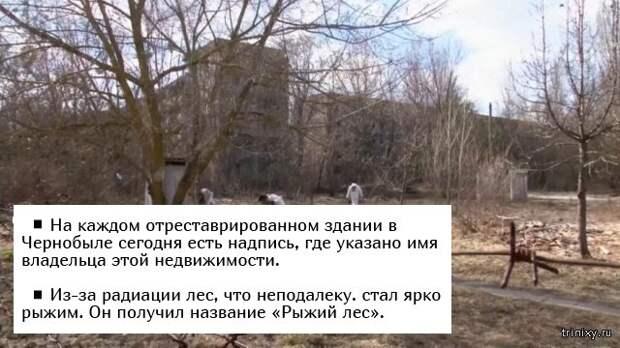 Факты о Чернобыльской катастрофе