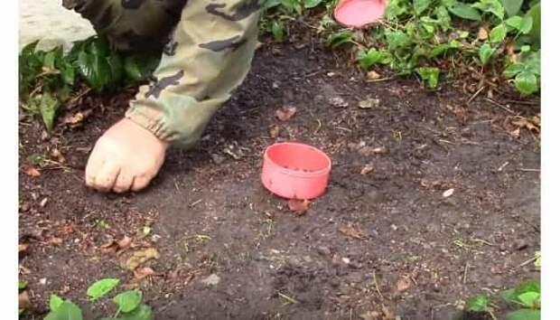 Хитрый способ накопать червей для рыбалки за 5-10 минут совсем без лопаты и в любом месте