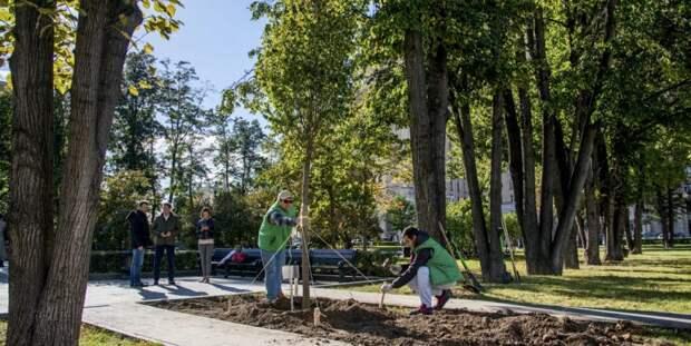 На проект «Наше дерево» подано более двух тысяч заявок. Фото: mos.ru
